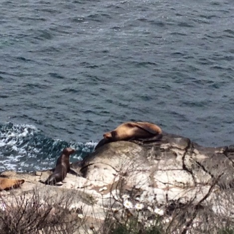 I was pretty much in the state of that sea lion for the rest of Saturday!
