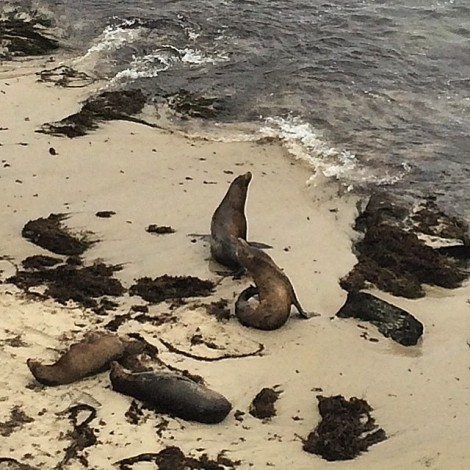 july26_sealions