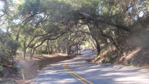 Rice Canyon Rd's oaked-in twisties (keep an eye on the road, tho. Ruts everywhere!).