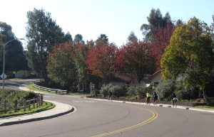 A colorful little climb on Willowsprings Dr.